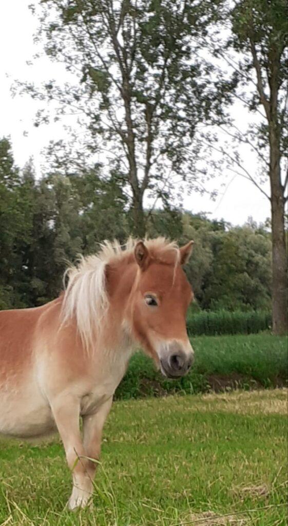 Pony Onze Missie